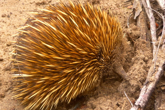J.J. Johnson, Author - Other Things I Do - Love All Echidnas Everywhere, Always!